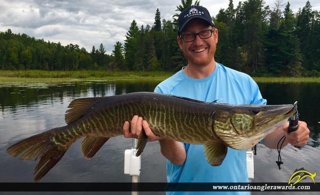 "39.5"" Muskie caught on Big Pine Lake"