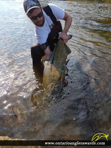 "41.5"" Chinook Salmon caught on Moira River"