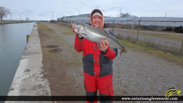 "28.00"" Rainbow Trout caught on Ganaraska River"